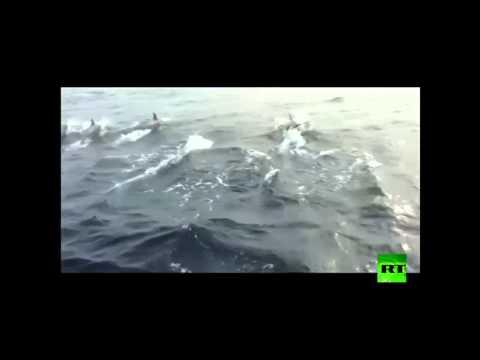 الدلافين ترافق الصيادين في الصين