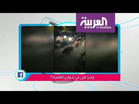 حقيقة فيديو صادم لوحيد القرن يتجول في القاهرة