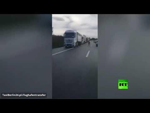 حماران وحشيان يثيران فوضى بأحد الطرق السريعة في ألمانيا