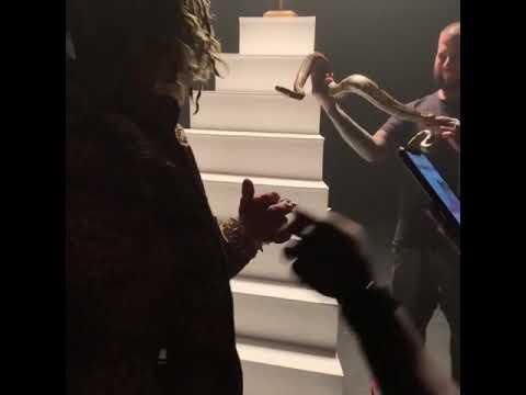 شاهد فنان يتعرض للدغة أفعى خلال تصويره فيديو كليب