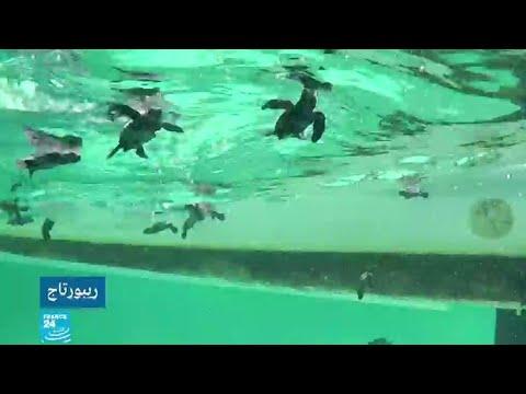 جزر قوريا التونسية محميات طبيعية تحتضن الكاوان