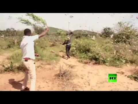 أسراب الجراد تغزو شرق إفريقيا بشكل غير مسبوق