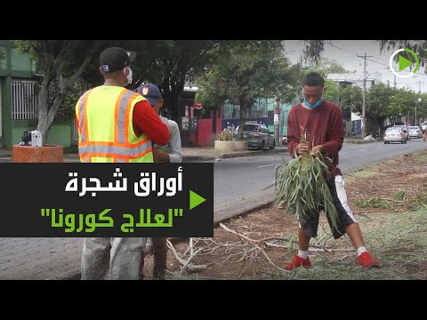 شاهد شوارع نيكاراغوا تمتلئ بباعة شجرة أوكالبتوس