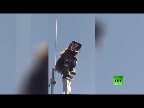 شاهد دُب يتسلل إلى قاعدة عسكرية تركية ويصعد إلى أحد الأبراج