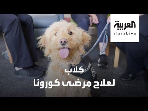شاهد هذا ما فعلته الكلاب مع مرضى كورونا في مستشفى أميركي