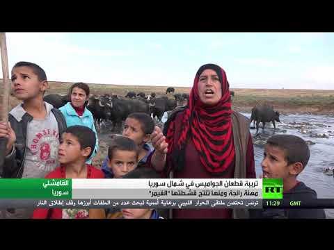 شاهد لغيمر قشطة حليب الجاموس من شمال سوريا