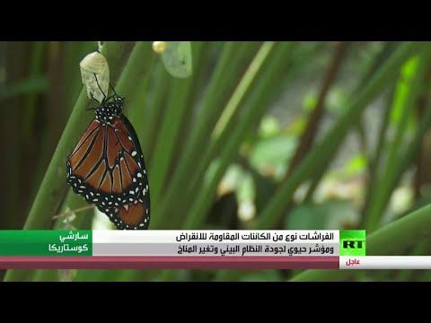 شاهد الفراشات مؤشر حيوي لجودة النظام البيئي وتغير المثناخ